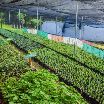 Programa Yo reforesto San Juan Sacatepéquez